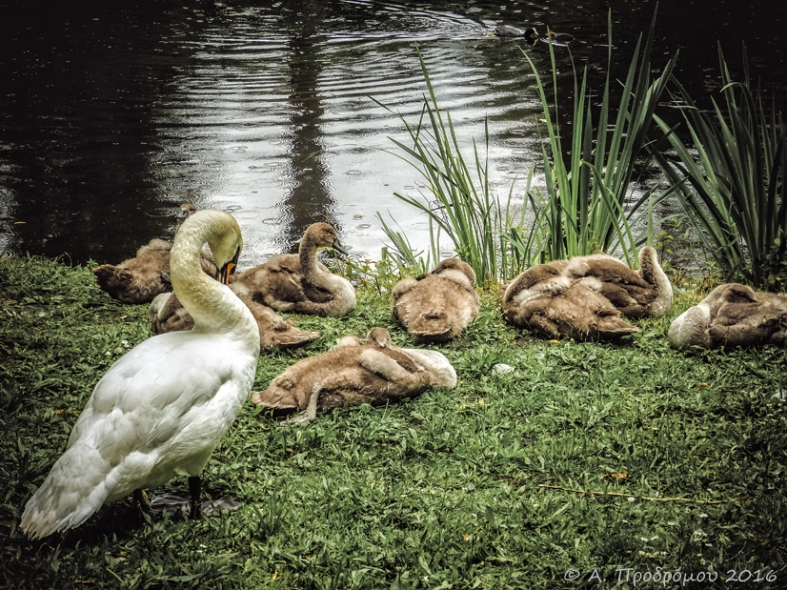 Κοντά στο Sackler Crossing, Βασιλικοί Βοτανικοί Κήποι, Kew, Richmond upon Thames, Αγγλία, Βρετανία (Close to Sackler Crossing, Royal Botanic Gardens, Kew, Richmond upon Thames, England, UK).